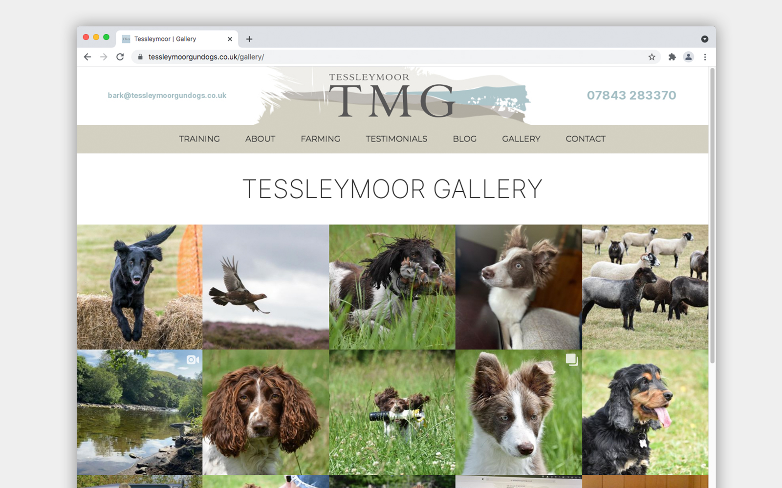 TMG Website photo gallery instagram feed